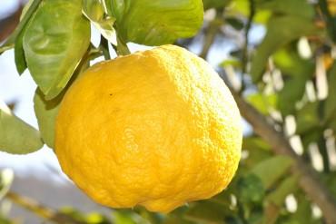 Zitrone, Grippe, Husten